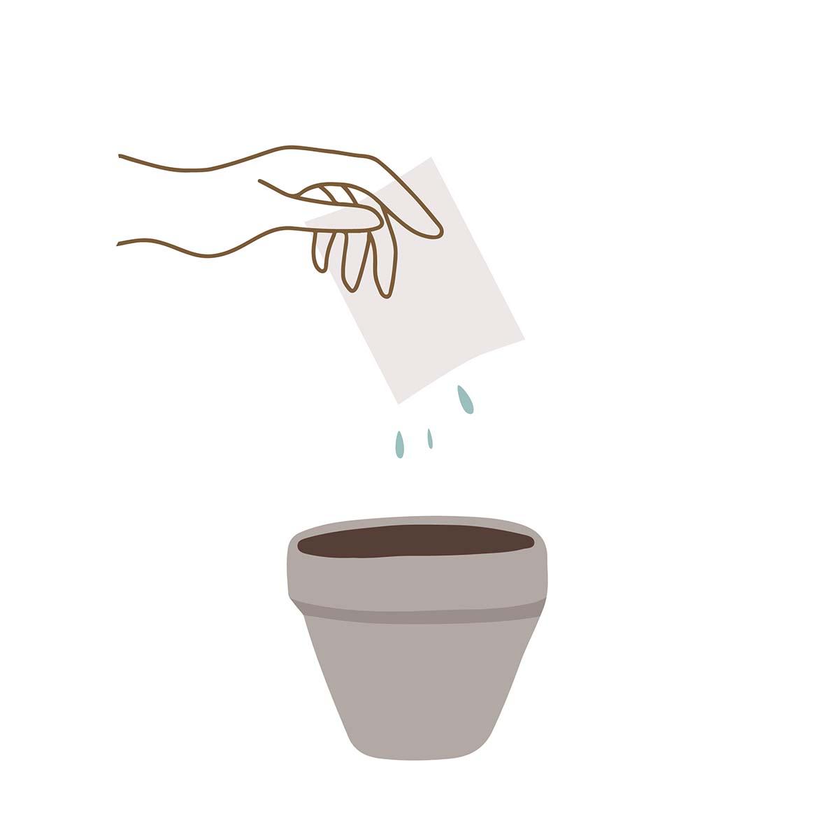 Bloom plantevejledning 1 - læg papiret kort i blød og placer det i en potte med jord
