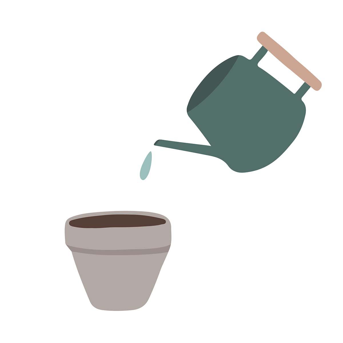 Bloom plantevejledning 2 - læg lidt ekstra jord oven i potten og vand derefter potten